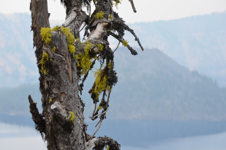 Crater Lake Photo 13